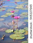 middle lotus ponds | Shutterstock . vector #545227045