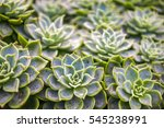 group of succulents. | Shutterstock . vector #545238991