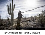 An Old Fence And A Cactus On A...