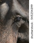 Small photo of Elephant head by close up.style with contrast of light abd shade.