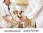 Stock photo cheerful vet shot of a young female veterinarian doctor using stethoscope listening to the 545270794
