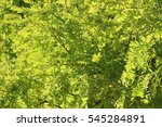 Small photo of Sap green leaves background