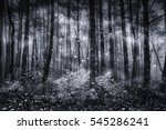 Winter Forest With Snowing In...