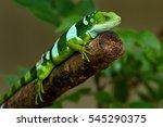 male fiji banded iguana ... | Shutterstock . vector #545290375