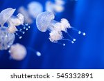 The Jellyfish Is A Tedious And...
