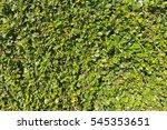 texture of green plant... | Shutterstock . vector #545353651