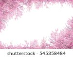 cherry blossom frame use as... | Shutterstock . vector #545358484