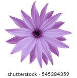 garden  light violet flower ... | Shutterstock . vector #545384359