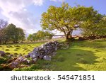 A Fallen Dry Stone Wall With...