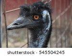 emu | Shutterstock . vector #545504245