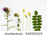 collection set of wild forest ...   Shutterstock . vector #545505229