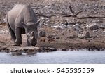 Small photo of Rhinoceros approaches an all too rare water hole in the Etosha National Park, Namibia