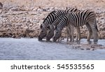 Small photo of Zebra line up to drink at an all too rare water hole in the Etosha National Park, Namibia