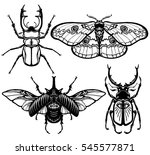 collection of images of insects ... | Shutterstock .eps vector #545577871