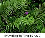 Green Fern Frond And A Single...
