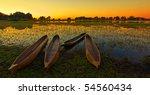 sunrise over the okavango delta ... | Shutterstock . vector #54560434