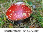 Mushroom Growing In A Meadow I...