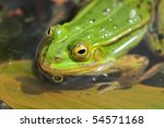 close up of frog on the leave | Shutterstock . vector #54571168