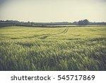 open expanse of wheat field on... | Shutterstock . vector #545717869