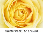 Close Up Of A Yellow Rose With...