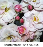 mary's lips rose pink garden... | Shutterstock . vector #545733715