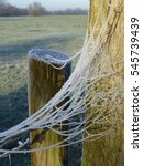 Frozen Cobweb On Wooden Post O...