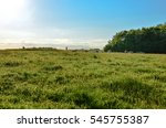 rolling pastures of the english ... | Shutterstock . vector #545755387
