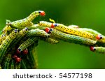 Green Worm Insect Of Beautiful...