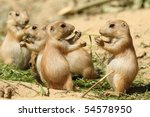 Stock photo two baby prairie dog sharing their food 54578950