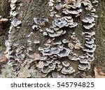 close up dry dead mushrooms on... | Shutterstock . vector #545794825