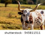 brown and white texas longhorn... | Shutterstock . vector #545811511
