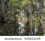 Spanish Moss Hanging From...