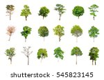 trees isolated on white... | Shutterstock . vector #545823145