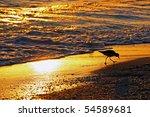 Shorebird Sanibel Island...