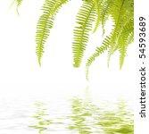 Green Fern Leaf With Reflection
