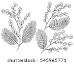 mimosa graphic black white... | Shutterstock .eps vector #545965771