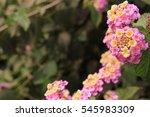 beautiful flower  | Shutterstock . vector #545983309