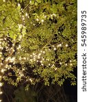 lighting decoreted tree at night | Shutterstock . vector #545989735