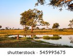 hwange national park is the... | Shutterstock . vector #545995675