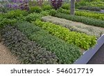 a well laid out herb garden | Shutterstock . vector #546017719