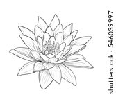 floral water lily for design ... | Shutterstock .eps vector #546039997