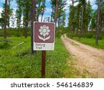 nature trail sign in a forest | Shutterstock . vector #546146839