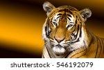 Tiger Sunset                ...