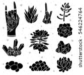 set of black succulents ... | Shutterstock .eps vector #546224764