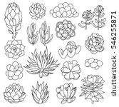 set of succulents and... | Shutterstock .eps vector #546255871
