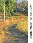 farm road | Shutterstock . vector #546313924
