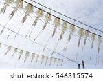 drying squid under sunlight | Shutterstock . vector #546315574