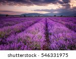 lavender fields. beautiful... | Shutterstock . vector #546331975