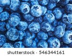 bilberry background texture... | Shutterstock . vector #546344161