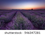 lavender fields. beautiful... | Shutterstock . vector #546347281
